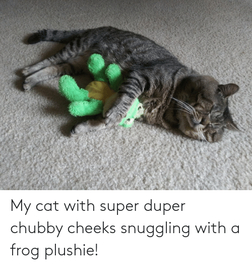 chubby: My cat with super duper chubby cheeks snuggling with a frog plushie!