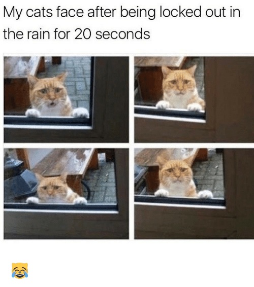 Locked Out: My cats face after being locked out in  the rain for 20 seconds 😹
