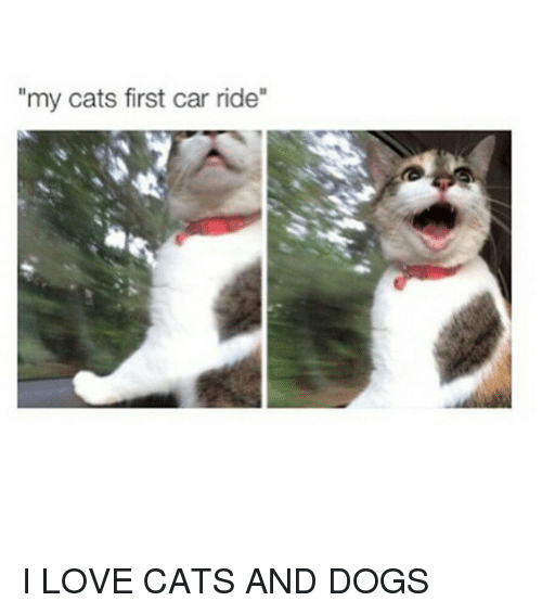 """cars: """"my cats first car ride I LOVE CATS AND DOGS"""