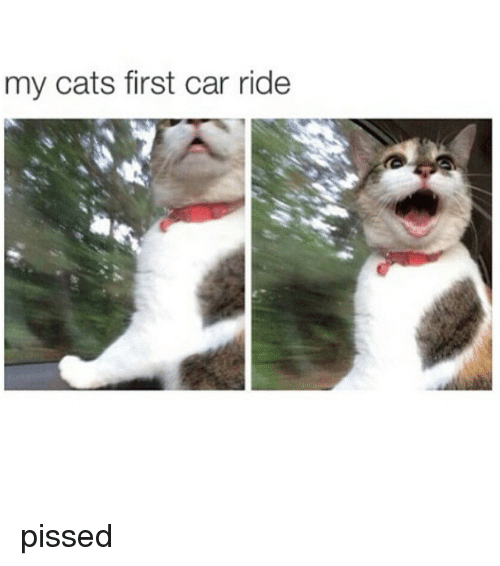 cars: my cats first car ride pissed