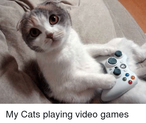 games with cats