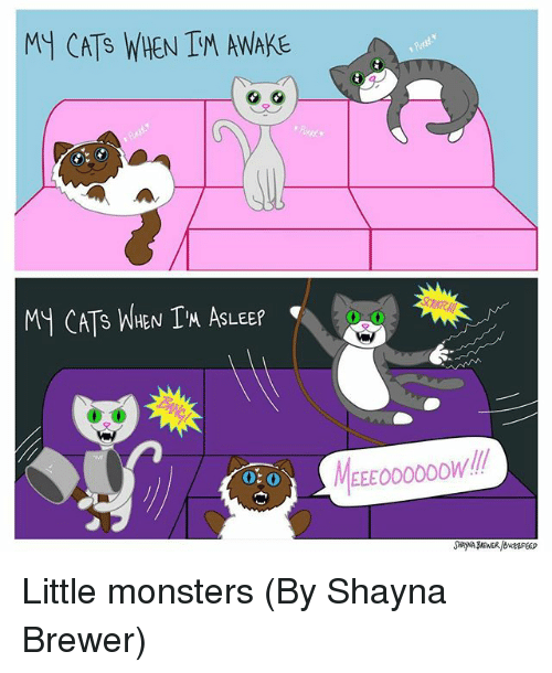 Cats, Memes, and 🤖: MY CATS WHEN IM AWAKE  My CAT's WHEN I'M ASLEEP  0.0  0-0  MEEEOOODOOWll  O: 0 Little monsters (By Shayna Brewer)