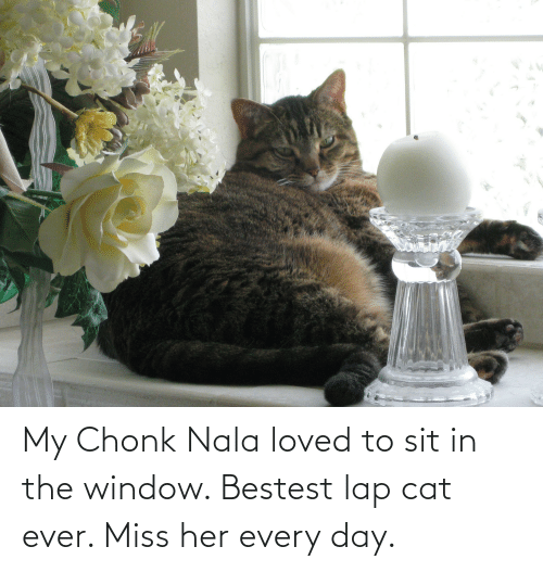 Sit In: My Chonk Nala loved to sit in the window. Bestest lap cat ever. Miss her every day.