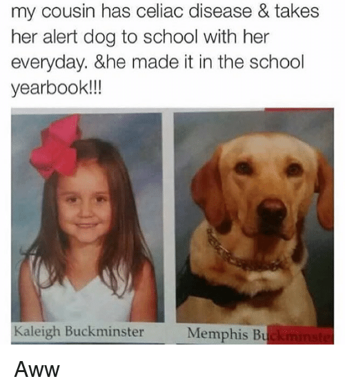 Aww, Funny, and School: my cousin has celiac disease & takes  her alert dog to school with her  everyday. &he made it in the school  yearbook!!!  Kaleigh Buckminster  Memphis Bu Aww
