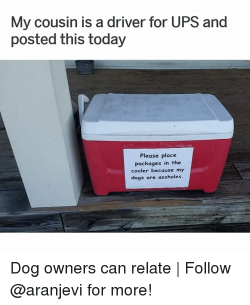 Dogs, Memes, and Ups: My cousin is a driver for UPS and  posted this today  Please place  packages in the  cooler because my  dogs are assholes Dog owners can relate | Follow @aranjevi for more!