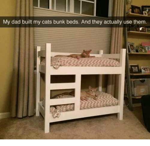 Jewish Bunk Bed for Sale