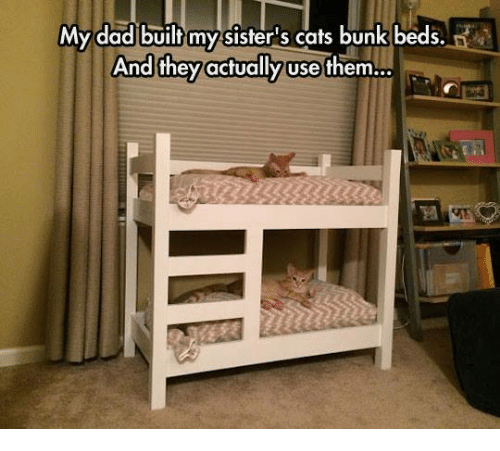 Cats, Dad, and Grumpy Cat: My dad built myy sisters cats bunk beds.  And they actually use them