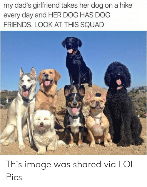 lol pics: my dad's girlfriend takes her dog on a hike  every day and HER DOG HAS DOG  FRIENDS. LOOK AT THIS SQUAD This image was shared via LOL Pics