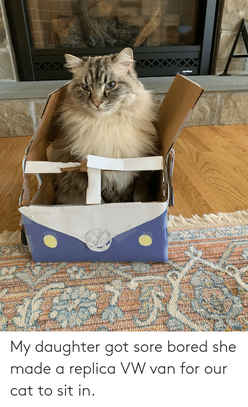 Sit In: My daughter got sore bored she made a replica VW van for our cat to sit in.
