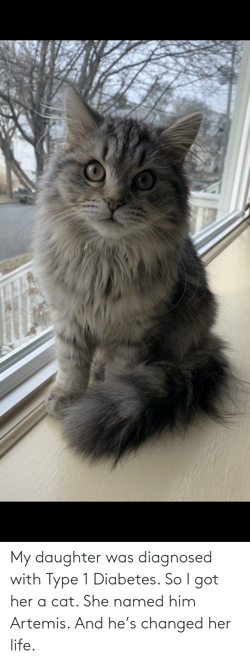Type-1 Diabetes: My daughter was diagnosed with Type 1 Diabetes. So I got her a cat. She named him Artemis. And he's changed her life.