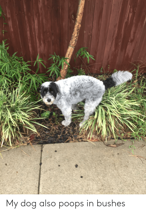 bushes: My dog also poops in bushes