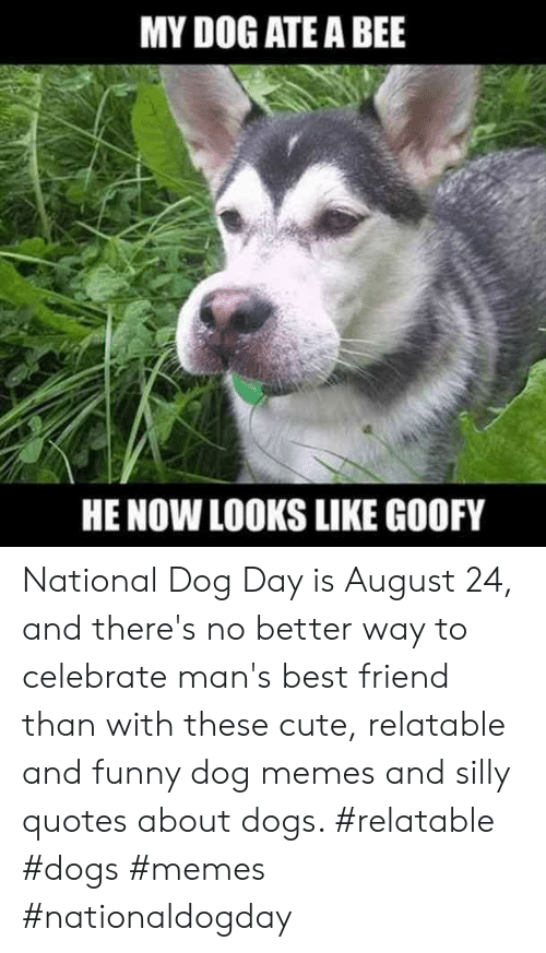 Silly Quotes: MY DOG ATE A BEE  HE NOW LOOKS LIKE GOOFY National Dog Day is August 24, and there's no better way to celebrate man's best friend than with these cute, relatable and funny dog memes and silly quotes about dogs.  #relatable #dogs #memes #nationaldogday