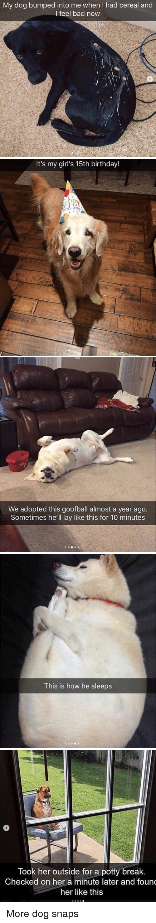 potty: My dog bumped into me when I had cereal and  I feel bad now   It's my girl's 15th birthday!   We adopted this goofball almost a year ago.  Sometimes he'll lay like this for 10 minutes   This is how he sleeps   Took her outside for a potty break  Checked on her a minute later and foun  her like this More dog snaps