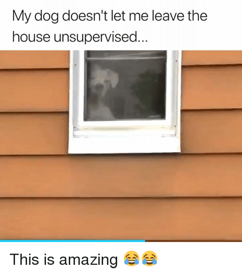 House, Amazing, and Dog: My dog doesn't let me leave the  house unsupervised... This is amazing 😂😂