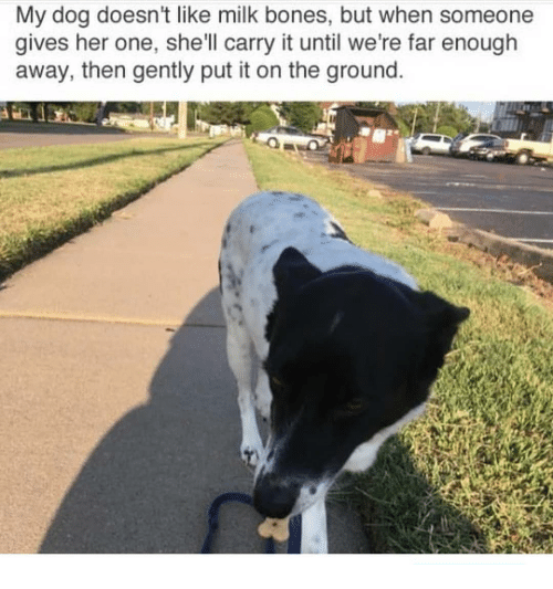 Bones, Memes, and 🤖: My dog doesn't like milk bones, but when someone  gives her one, she'll carry it until we're far enough  away, then gently put it on the ground
