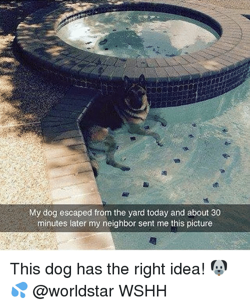 Memes, 🤖, and Idea: My dog escaped from the yard today and about 30  minutes later my neighbor sent me this picture This dog has the right idea! 🐶 💦 @worldstar WSHH