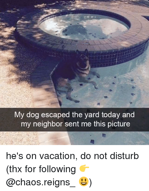Memes, Today, and Vacation: My dog escaped the yard today and  my neighbor sent me this picture he's on vacation, do not disturb (thx for following 👉 @chaos.reigns_ 😃)