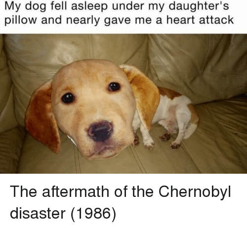 aftermath: My dog fell asleep under my daughter's  pillow and nearly gave me a heart attack The aftermath of the Chernobyl disaster (1986)