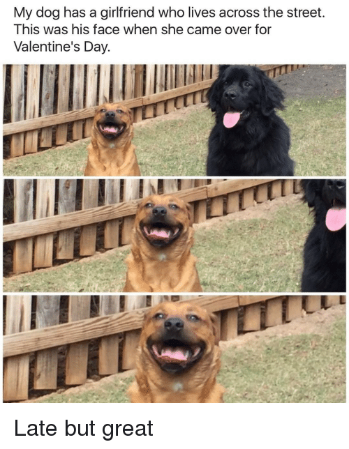 Memes, Streets, and Valentine's Day: My dog has a girlfriend who lives across the street.  This was his face when she came over for  Valentine's Day. Late but great