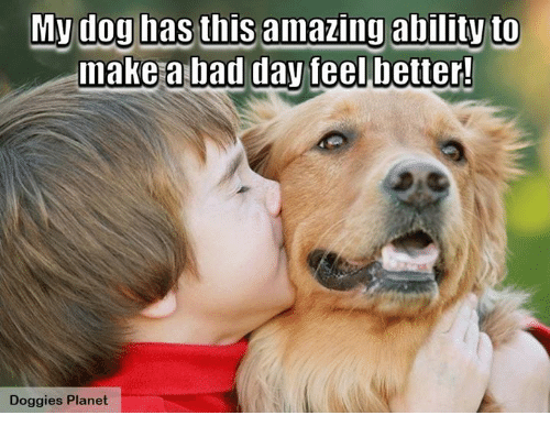 Bad, Bad Day, and Dogs: My dog has this amazing ability to  make a bad day feelbetter!  Doggies Planet