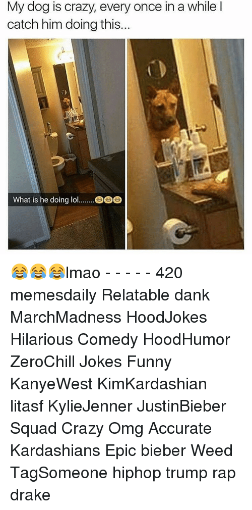 Crazy, Dank, and Drake: My dog is crazy, every once in a while l  is catch him doing this...  What is he doing lol 😂😂😂lmao - - - - - 420 memesdaily Relatable dank MarchMadness HoodJokes Hilarious Comedy HoodHumor ZeroChill Jokes Funny KanyeWest KimKardashian litasf KylieJenner JustinBieber Squad Crazy Omg Accurate Kardashians Epic bieber Weed TagSomeone hiphop trump rap drake
