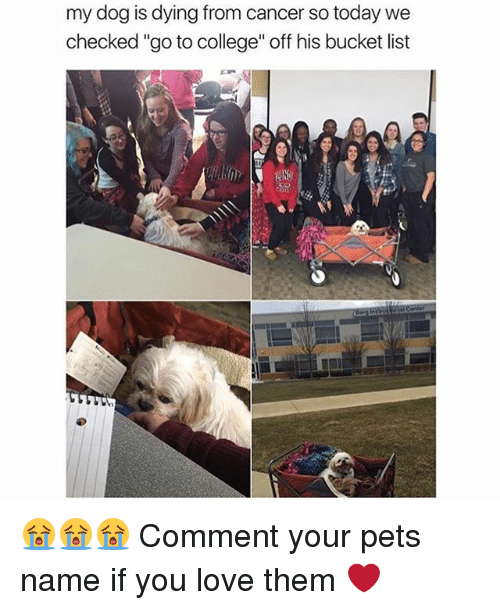 """Off: my dog is dying from cancer so today we  checked """"go to college"""" off his bucket list 😭😭😭 Comment your pets name if you love them ❤️"""