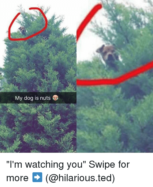 """im watching you: My dog is nuts """"I'm watching you"""" Swipe for more ➡ (@hilarious.ted)"""