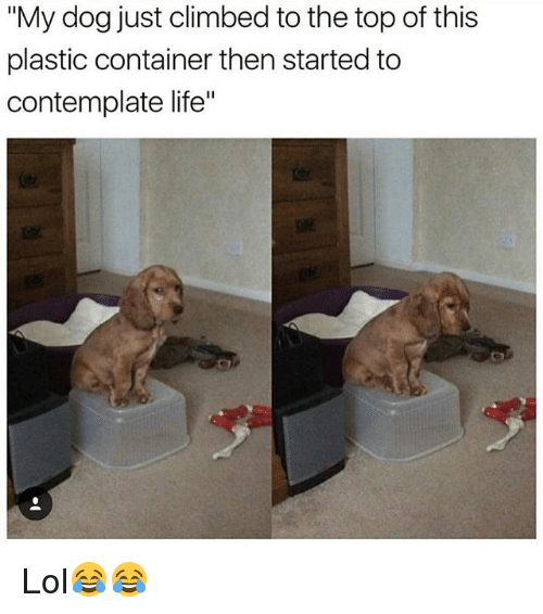 """Funny, Life, and Lol: """"My dog just climbed to the top of this  plastic container then started to  contemplate life"""" Lol😂😂"""