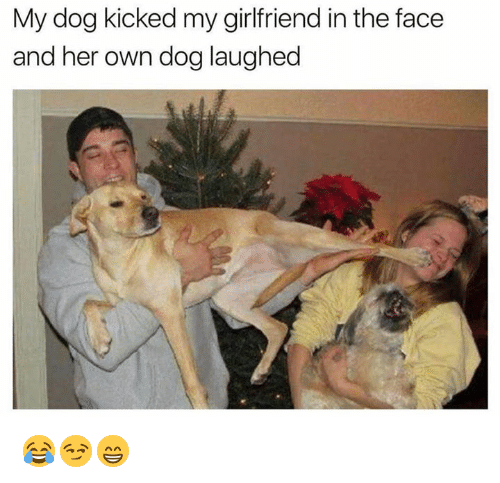 Girlfriend, Her, and Dog: My dog kicked my girlfriend in the face  and her own dog laughed 😂😏😁