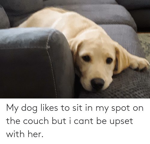 Sit In: My dog likes to sit in my spot on the couch but i cant be upset with her.