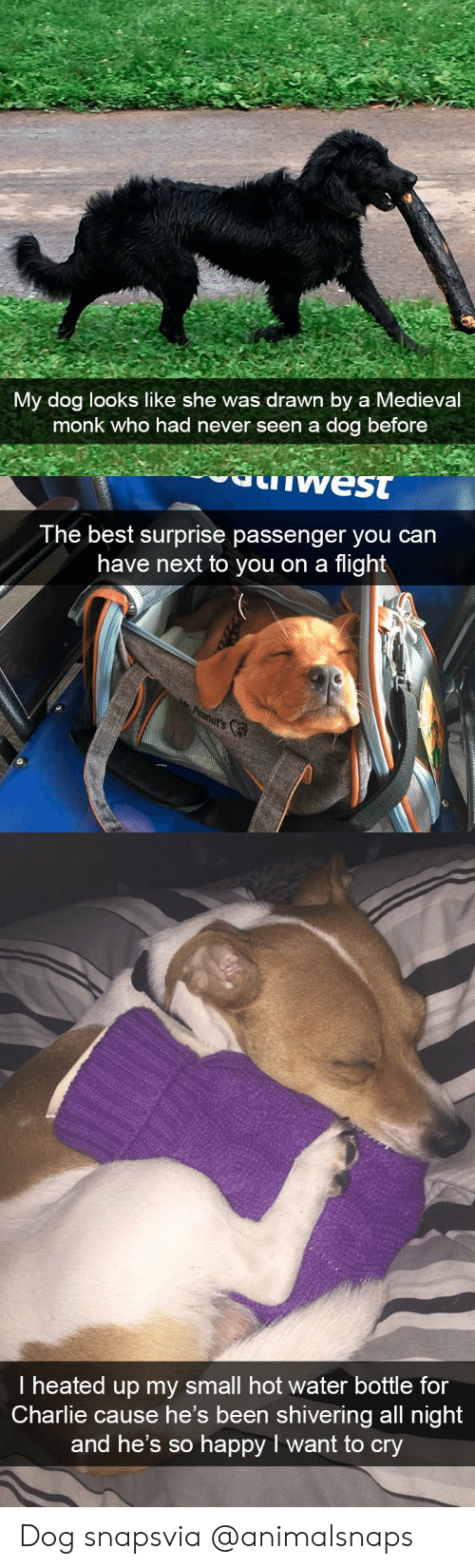 Heated: My dog looks like she was drawn by a Medieval  monk who had never seen a dog before   west  The best surprise passenger you can  have next to you on a flight   I heated up my small hot water bottle for  Charlie cause he's been shivering all night  and he's so happy I want to cry Dog snapsvia @animalsnaps​