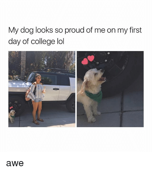 aweful: My dog looks so proud of me on my first  day of college lol awe