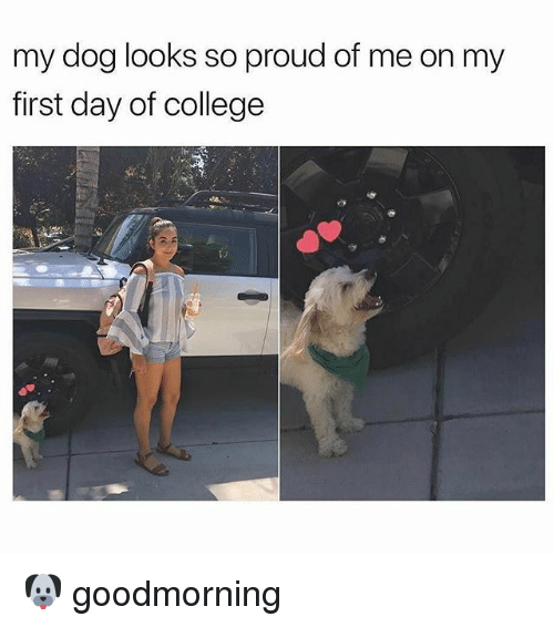 College, Memes, and Proud: my dog looks so proud of me on my  first day of college 🐶 goodmorning