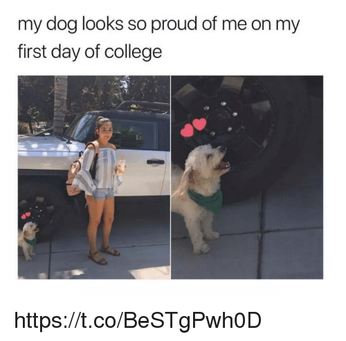 College, Memes, and Proud: my dog looks so proud of me on my  first day of college https://t.co/BeSTgPwh0D