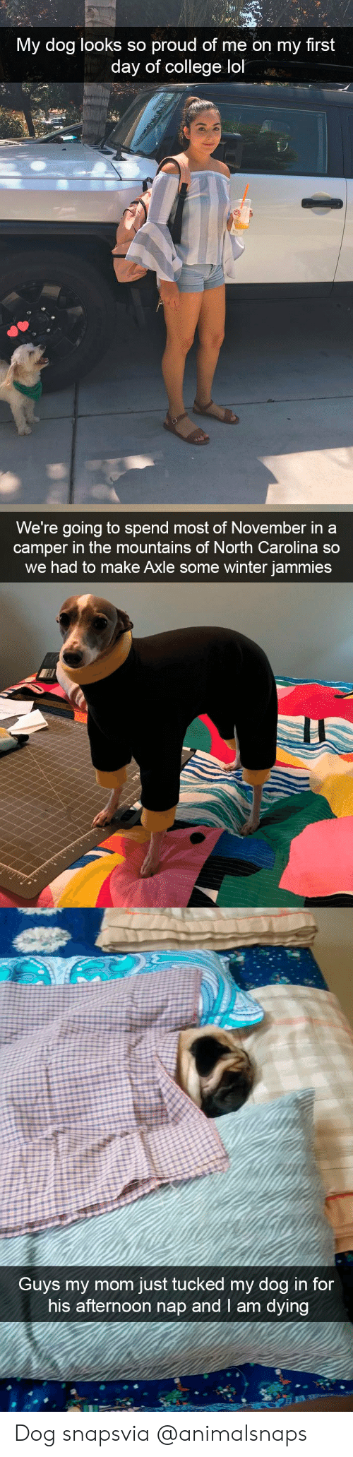 Camper: My dog looks so proud of me on my first  day of college lol   We're going to spend most of November in a  camper in the mountains of North Carolina so  we had to make Axle some winter jammies   Guvs my mom just tucked my dog in for  his afternoon nap and I am dying Dog snapsvia @animalsnaps