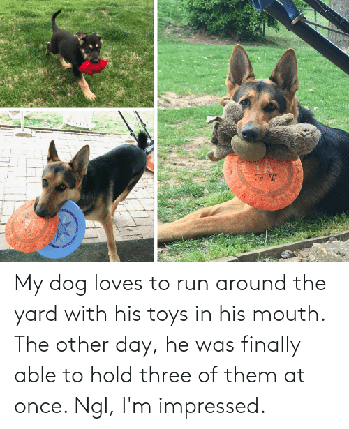 Toys: My dog loves to run around the yard with his toys in his mouth. The other day, he was finally able to hold three of them at once. Ngl, I'm impressed.
