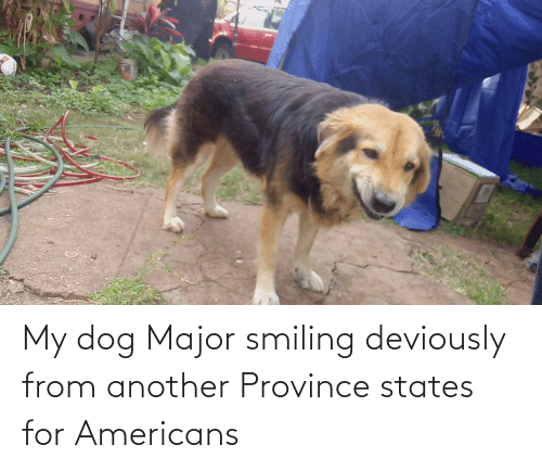 major: My dog Major smiling deviously from another Province states for Americans