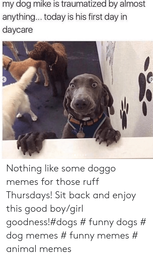 Daycare: my dog mike is traumatized by almost  anything... today is his first day in  daycare Nothing like some doggo memes for those ruff Thursdays! Sit back and enjoy this good boy/girl goodness!#dogs # funny dogs # dog memes # funny memes # animal memes