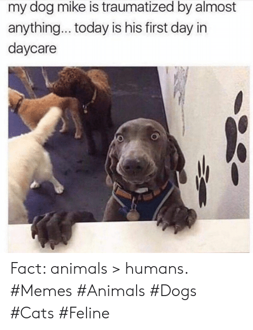 Daycare: my dog mike is traumatized by almost  anything... today is his first day in  daycare Fact: animals > humans. #Memes #Animals #Dogs #Cats #Feline