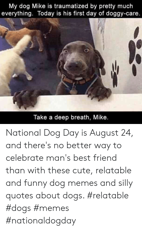 Silly Quotes: My dog Mike is traumatized by pretty much  everything. Today is his first day of doggy-care.  Take a deep breath, Mike. National Dog Day is August 24, and there's no better way to celebrate man's best friend than with these cute, relatable and funny dog memes and silly quotes about dogs.  #relatable #dogs #memes #nationaldogday