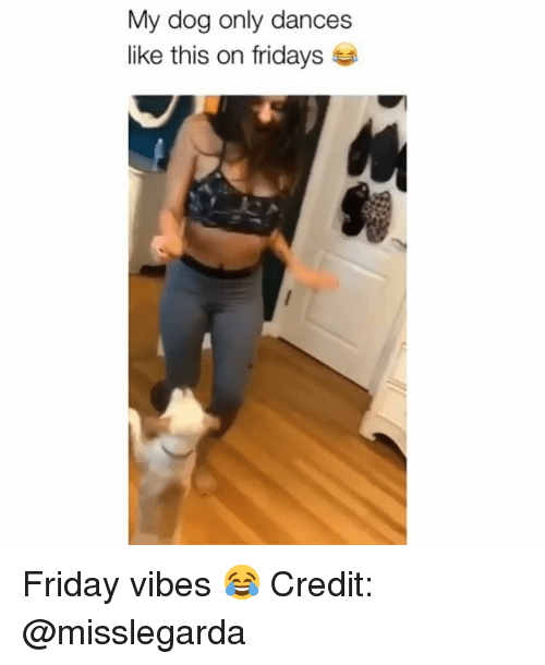 fridays: My dog only dances  like this on fridays Friday vibes 😂 Credit: @misslegarda