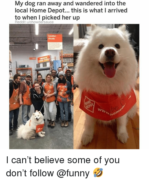 Funny, Memes, and Reddit: My dog ran away and wandered into the  local Home Depot... this is what I arrived  to when l picked her up  Reddit u/chowdersauce I can't believe some of you don't follow @funny 🤣