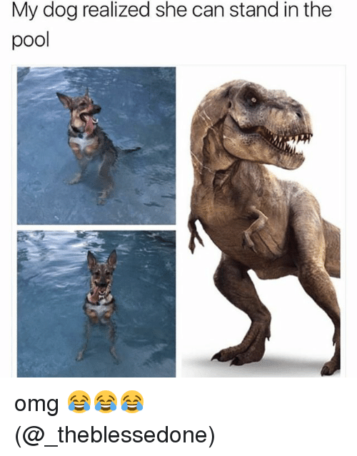 Memes, Omg, and Pool: My dog realized she can stand in the  pool omg 😂😂😂 (@_theblessedone)