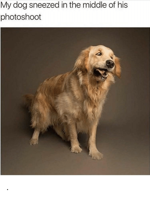 photoshoot: My dog sneezed in the middle of his  photoshoot .