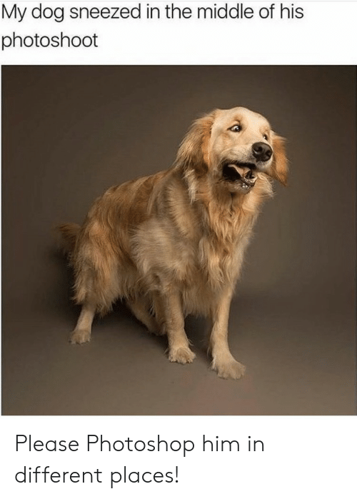 photoshoot: My dog sneezed in the middle of his  photoshoot Please Photoshop him in different places!