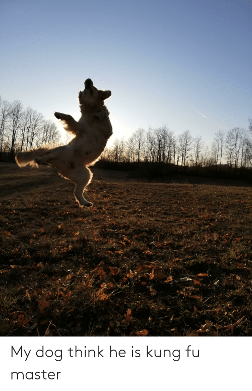 kung fu master: My dog think he is kung fu master