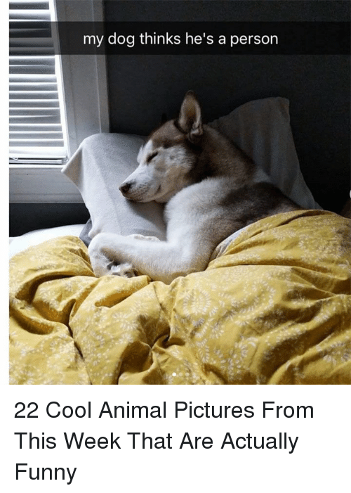 Funny, Animal, and Cool: my dog thinks he's a person 22 Cool Animal Pictures From This Week That Are Actually Funny