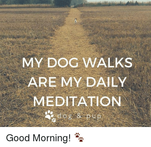 good mornings: MY DOG WALKS  ARE MY DAILY  MEDITATION Good Morning! 🐾