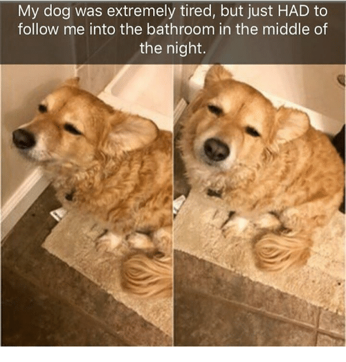 Dank, The Middle, and 🤖: My dog was extremely tired, but just HAD to  follow me into the bathroom in the middle of  the night