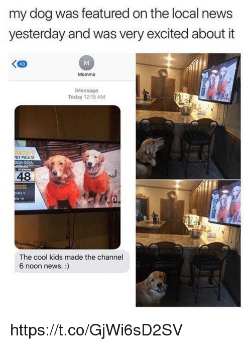 Memes, News, and Cool: my dog was featured on the local news  yesterday and was very excited about it  く四  48  Momma  iMessage  Today 12 15 AM  PET PICS  EVENING  48  EATHER  HILLY  w 10  The cool kids made the channel  6 noon news. : https://t.co/GjWi6sD2SV